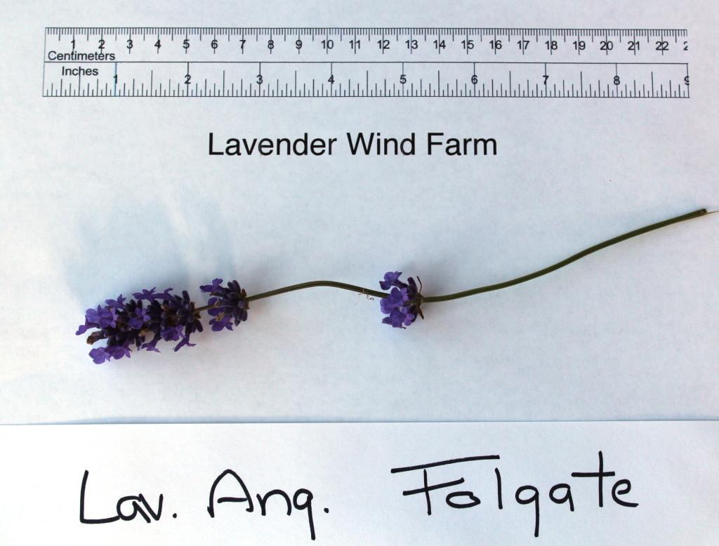 Folgate Flower