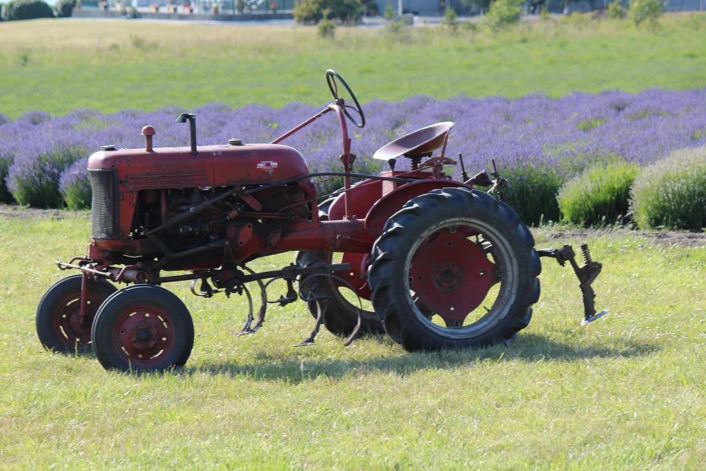 Farmall Cup Tractor