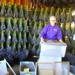 Mare Processing Lavender