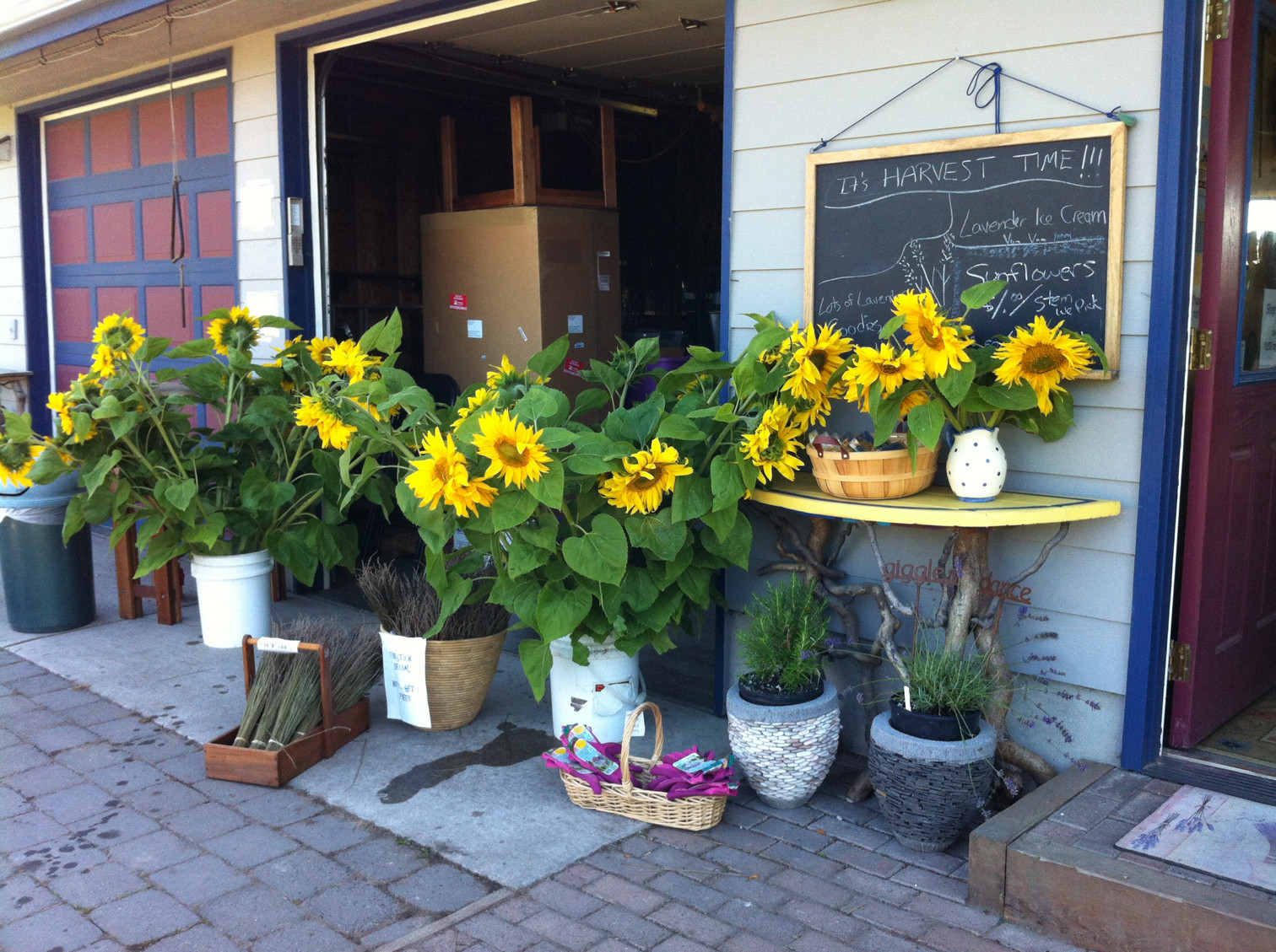 Sunflowers in front of shop
