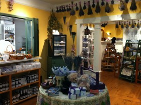 Grand Opening of Lavender Wind