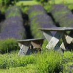 Picnic Tables on Farm
