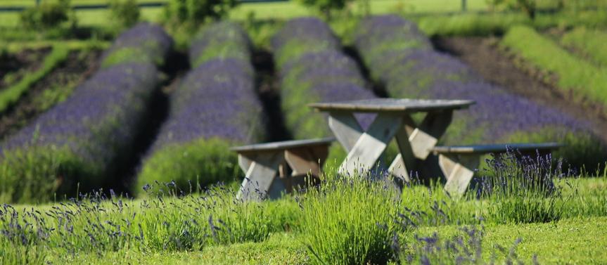 Picnic Tables on Farm