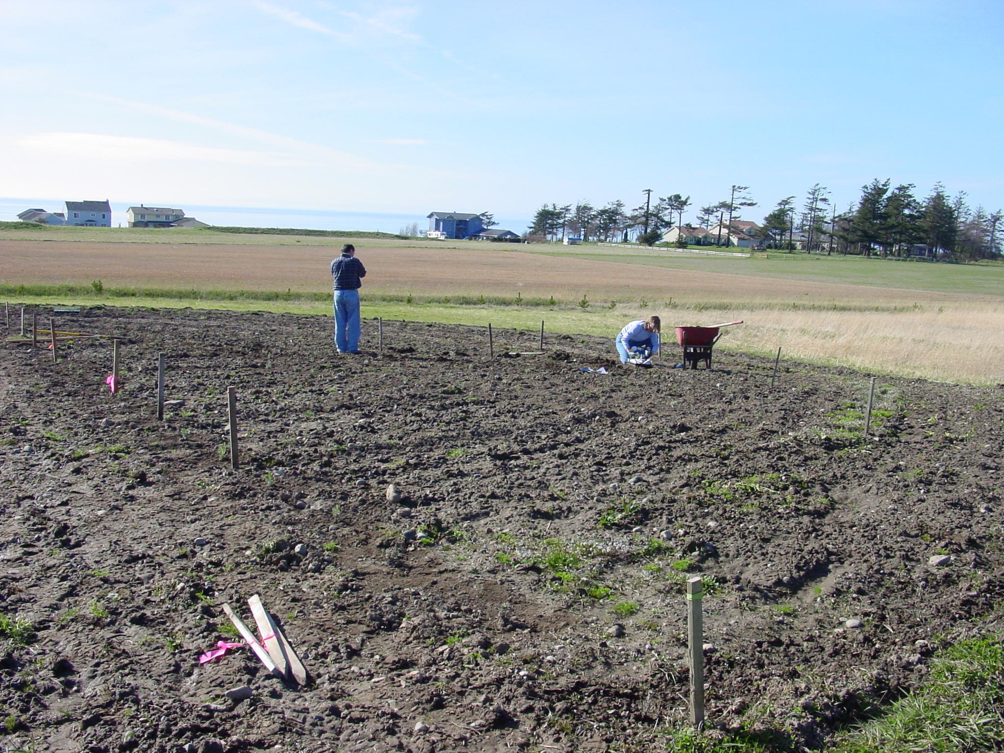 Planting the labyrinth 2002