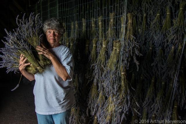 Gathering Lavender at Granery