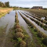 Flood, Fire, Farming