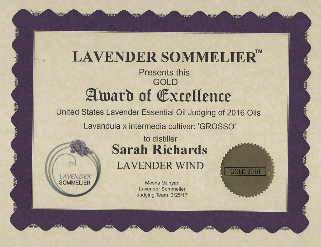 Lavandula x-intermedia var. Grosso Gold Award