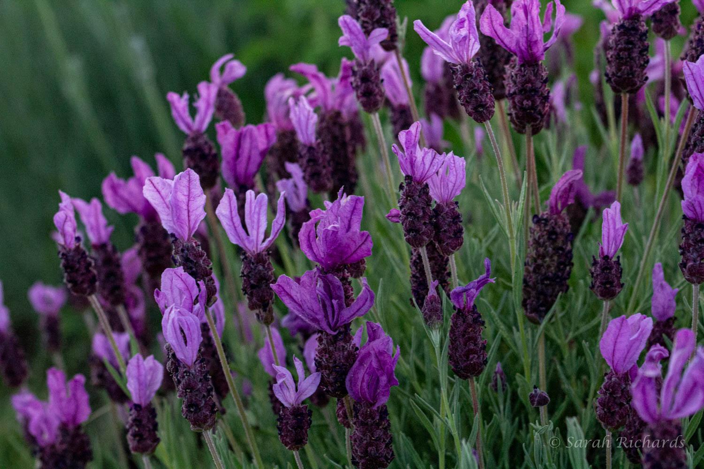 Sarah, Author at Lavender Wind